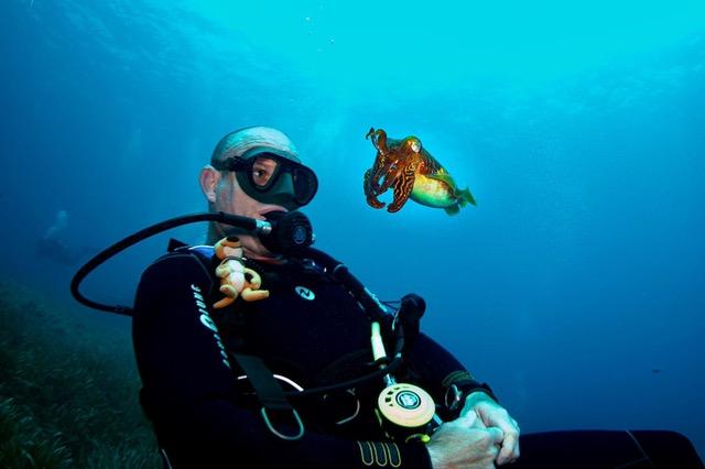 PADI Aware Fish Identification
